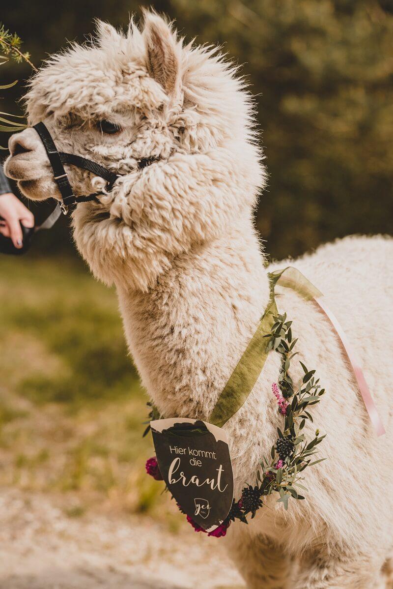 Hochzeitslama, Hochzeitsideen Tiere