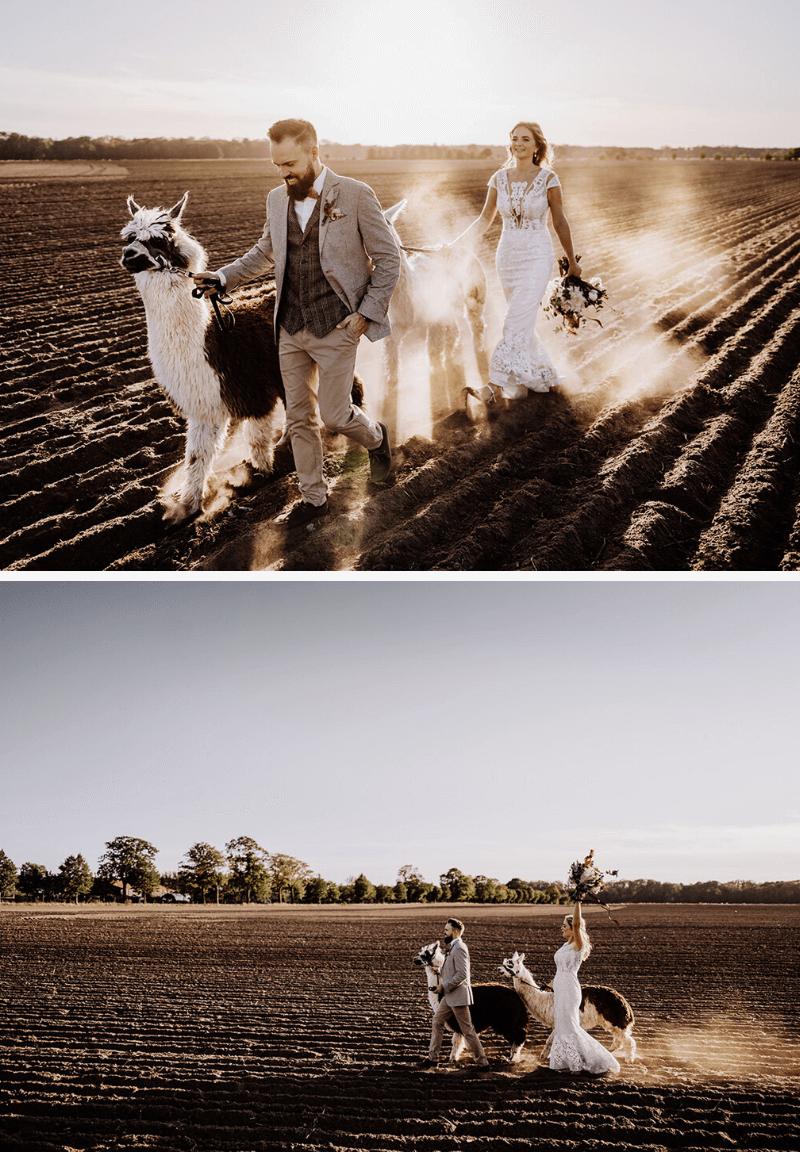 Brautpaarshooting mit Alpakas