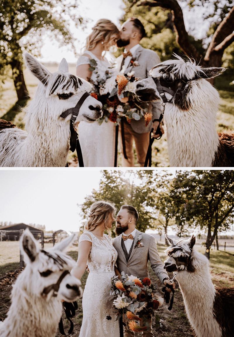Hochzeit Alpakas