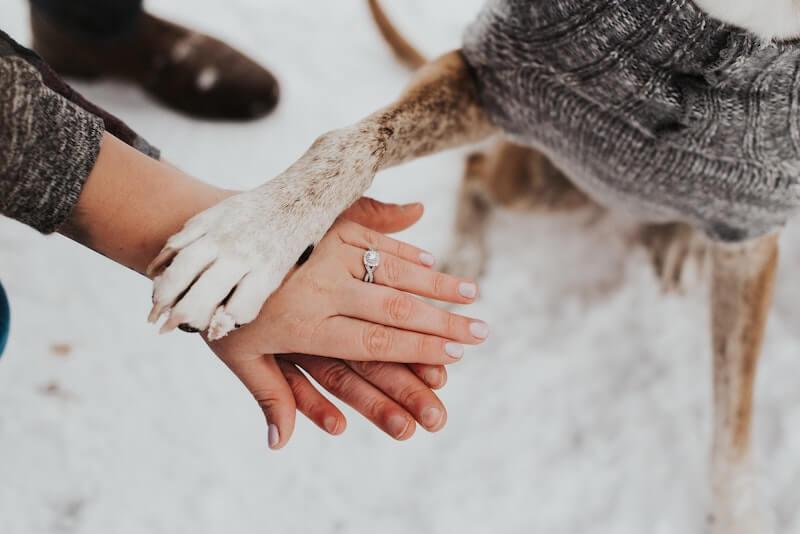 Hochzeitsfotos mit Hundd