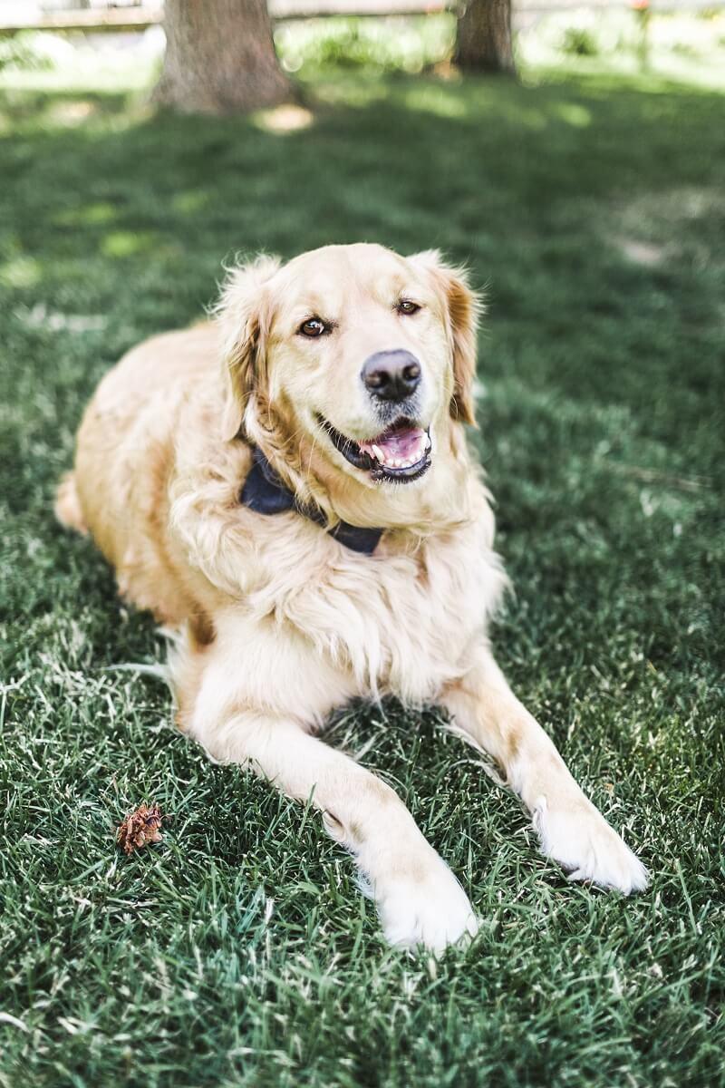 Hund auf Hochzeit Accessoires