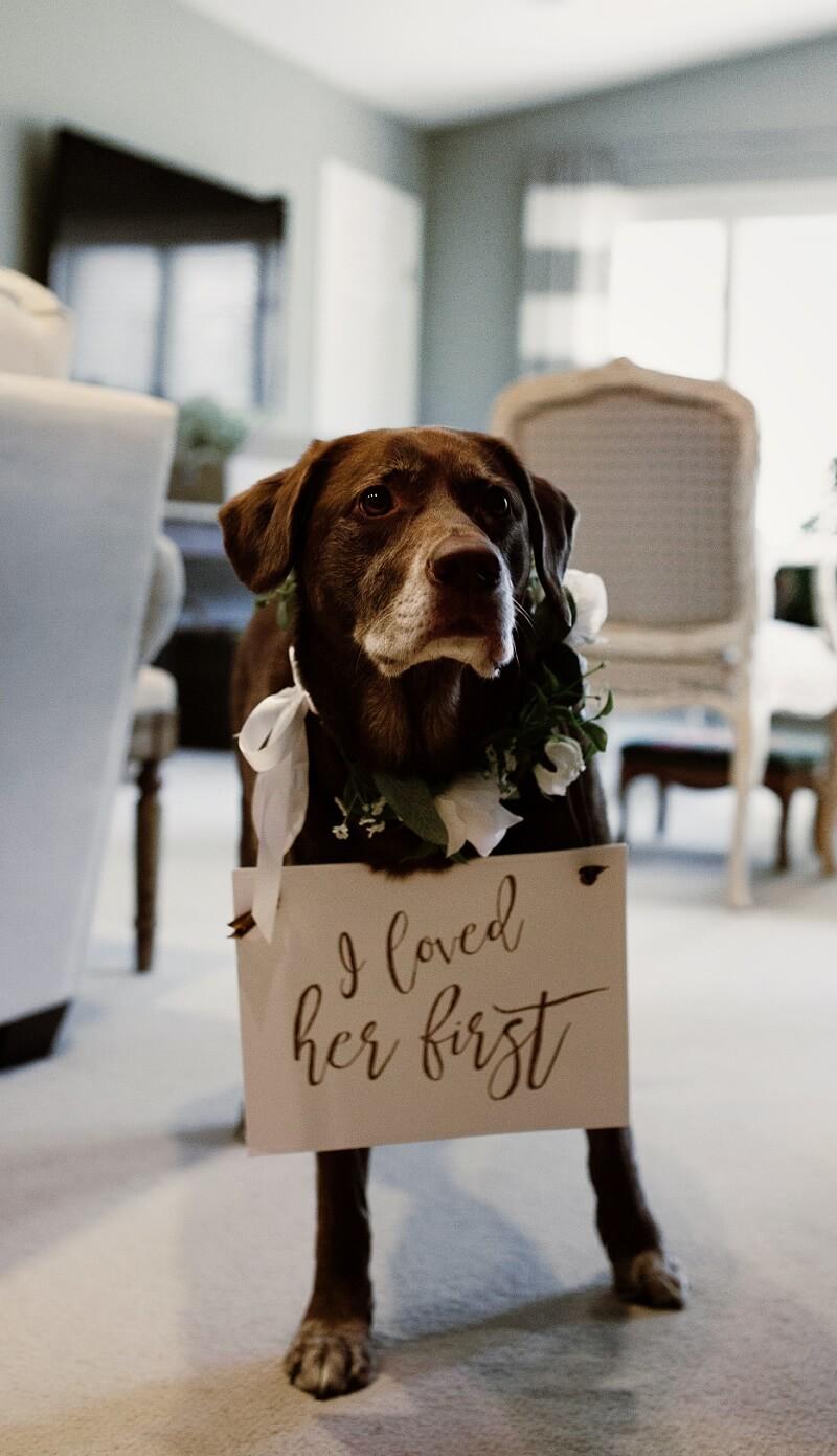 Hochzeit mit Hund Accessoires