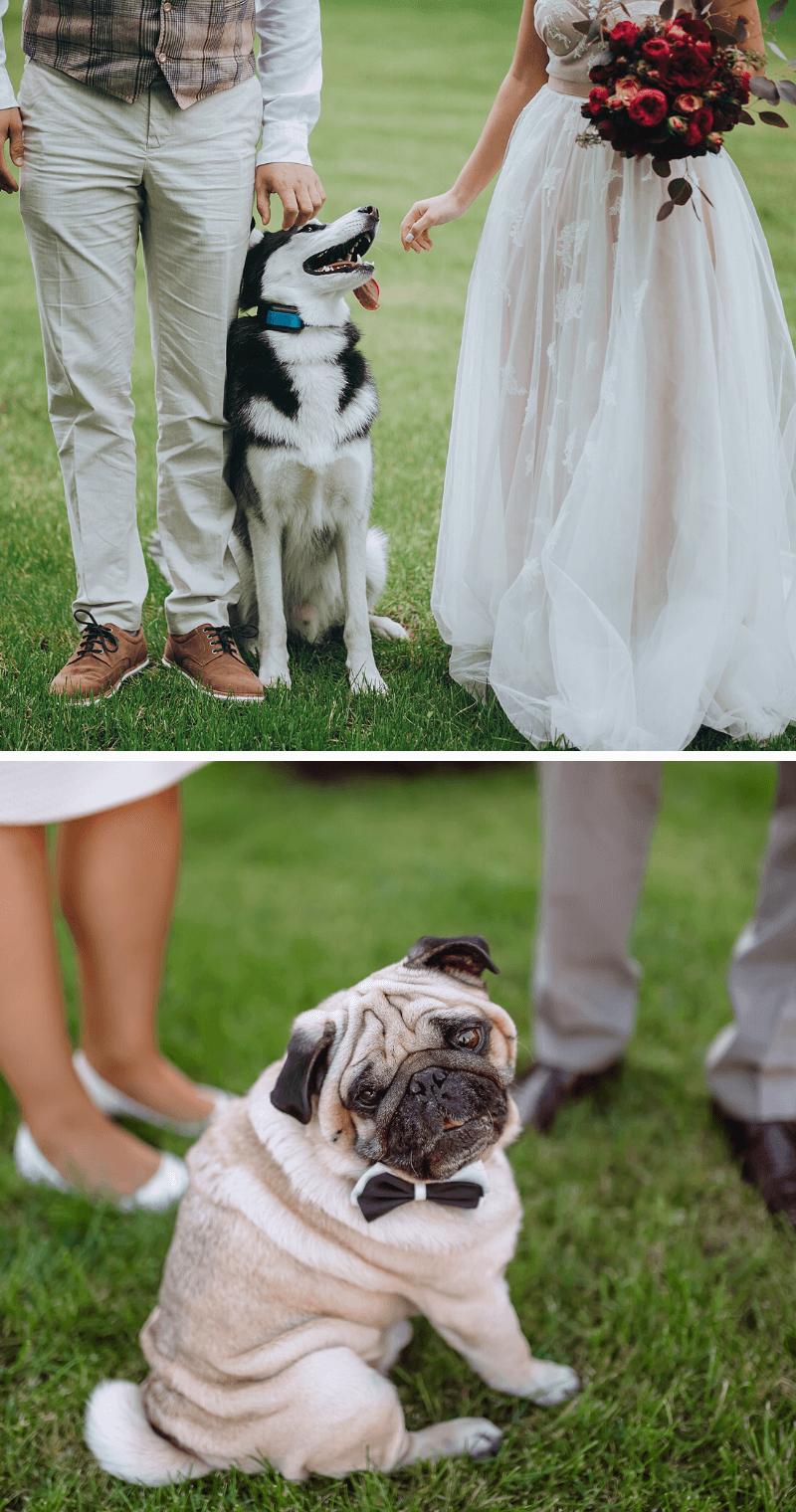 Hochzeit mit Tier Fotoshooting