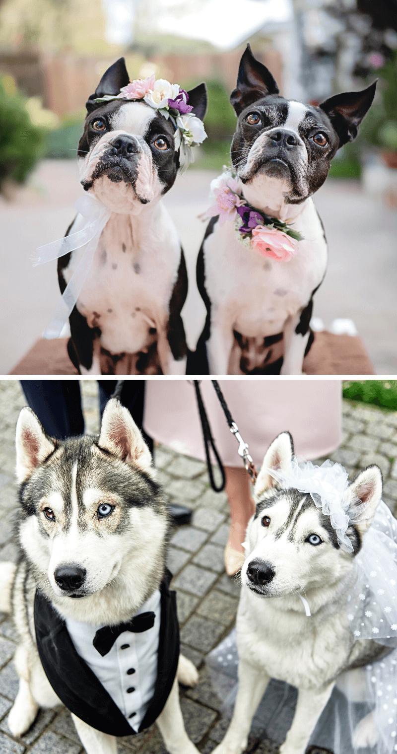 Hund Accessoires Hochzeit